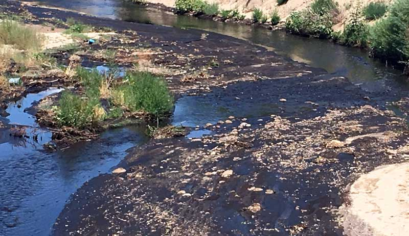Gila trout saved from aftermath of frye fire for Gila river fishing