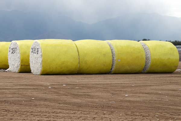 Jon Johnson Photo/Gila Valley Central: Plastic wrapped cotton modules await the ginning process.