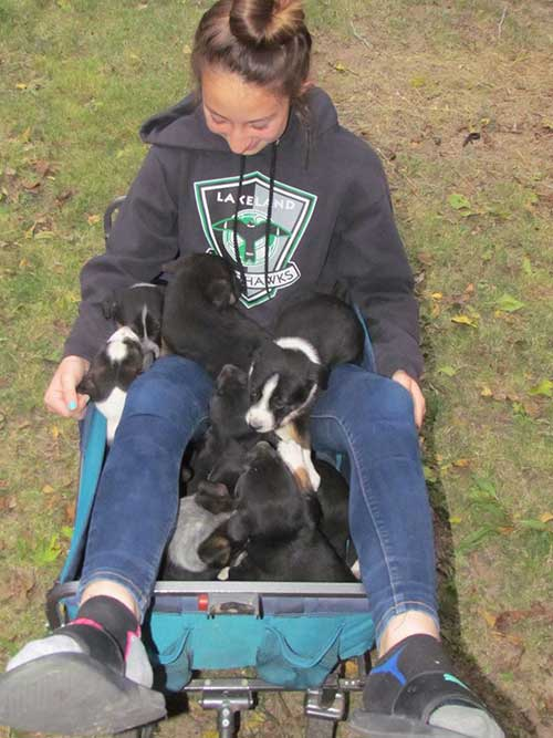 Contributed photo by Amber Johnson: Lucy Johnson enjoying the company of adorable puppies.