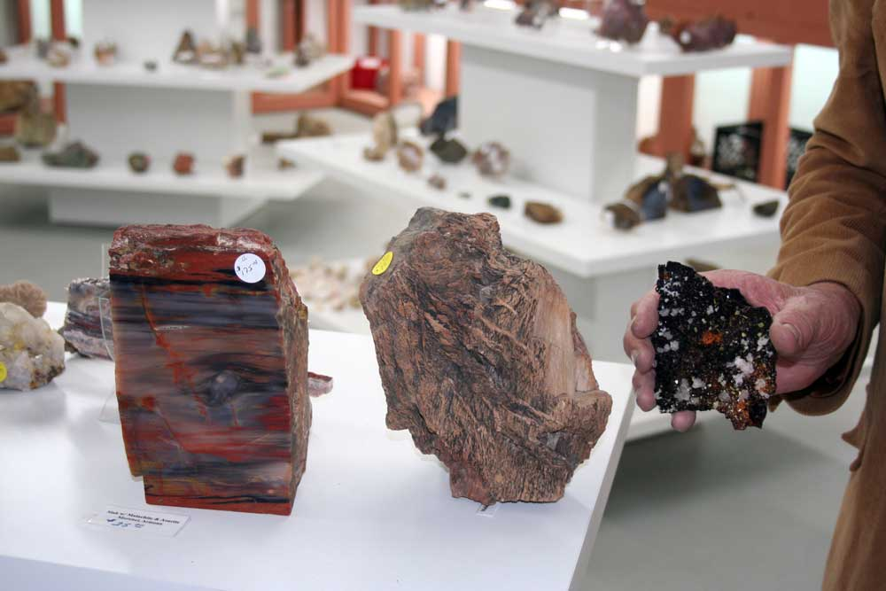 Photo By Walter Mares: A large piece of Arizona petrified wood, at left, along with another piece piece of Arizona petrified wood that comes from Greenlee County, and a mysterious black rock are displayed in a hand of Doug Barlow, owner of the Rock-A Buy rock shop in Duncan. Interestingly, Rock-A-Buy is the only rock shop in Greenlee County, which has a long and rich mining history. In fact, it is the only rock shop to exist in Greenlee in anybody's memory, including local natives who are in their 70s and 80s.