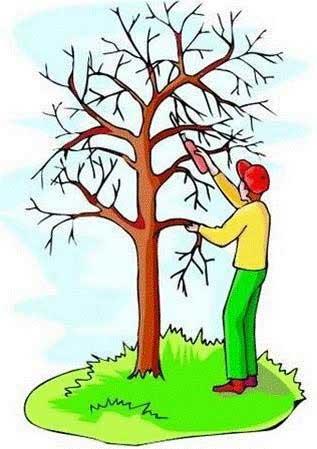 poster-pruning-3